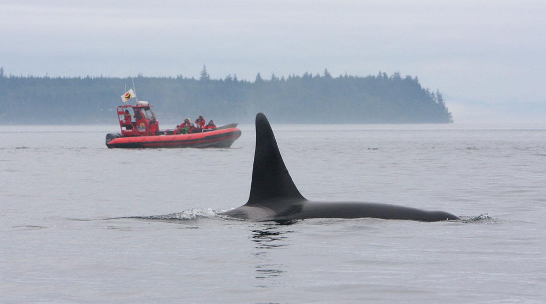 North Vancouver Island, Canada