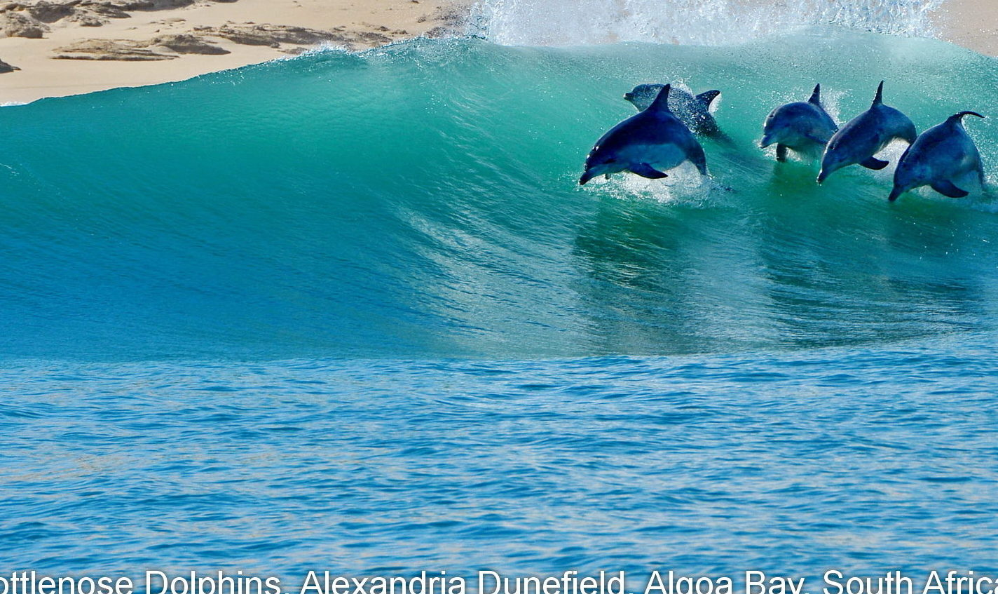 WCA_Bottlenose_dolphins_Alexandria_Dunefields_Algoa_Bay_Greater_Addo_Elephant_National_Park_Lloyd_Edwards-e1506419871507