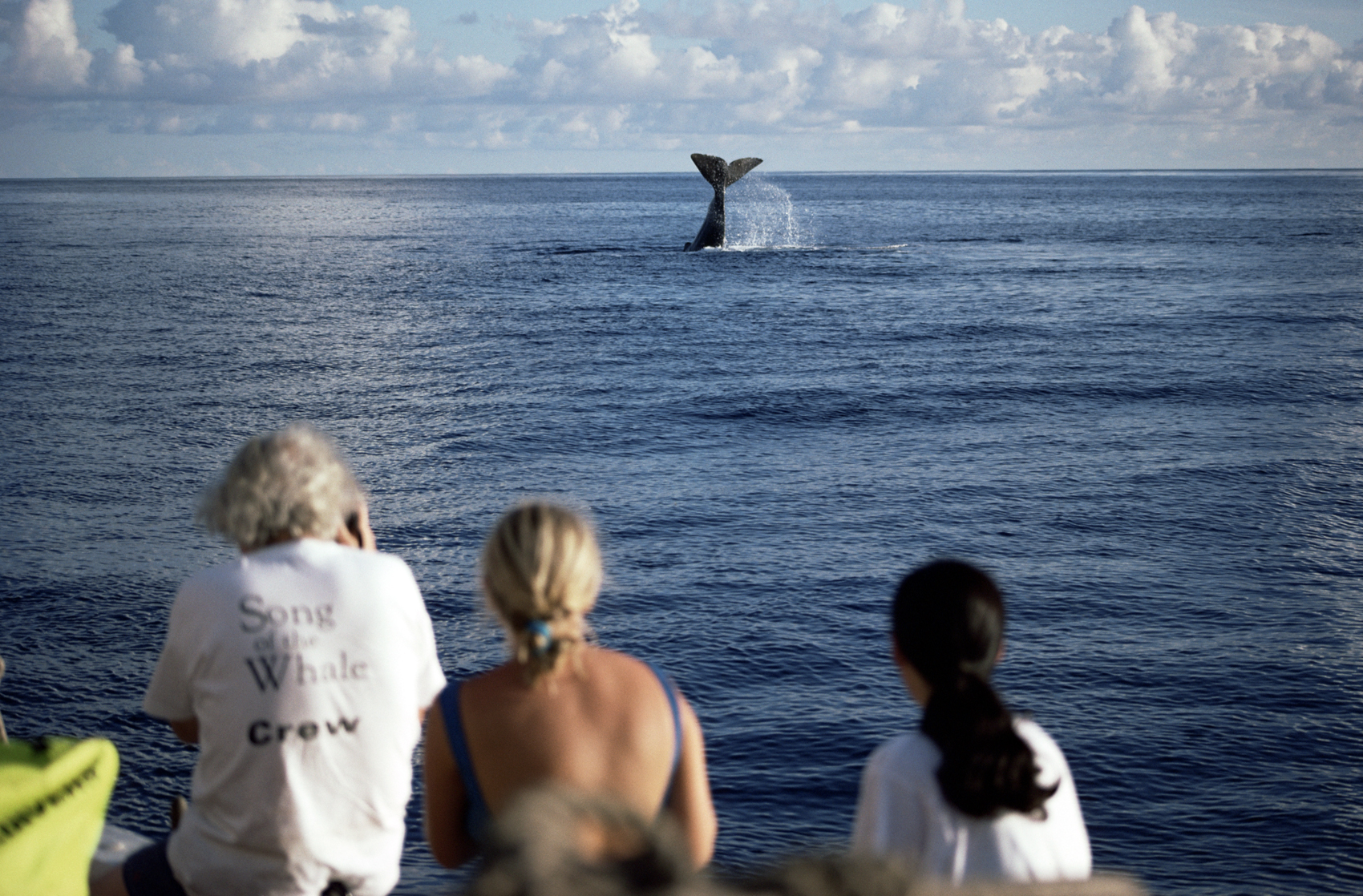 SpermWhale_WhaleWatchers_Azores_WhaleWatchAzores_01