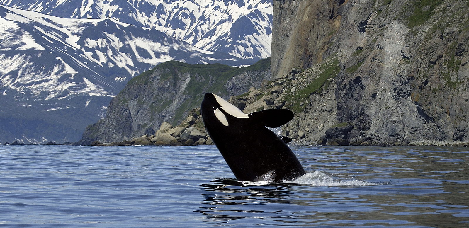 4 April 2016 – Whale Heritage Sites Launch Day!