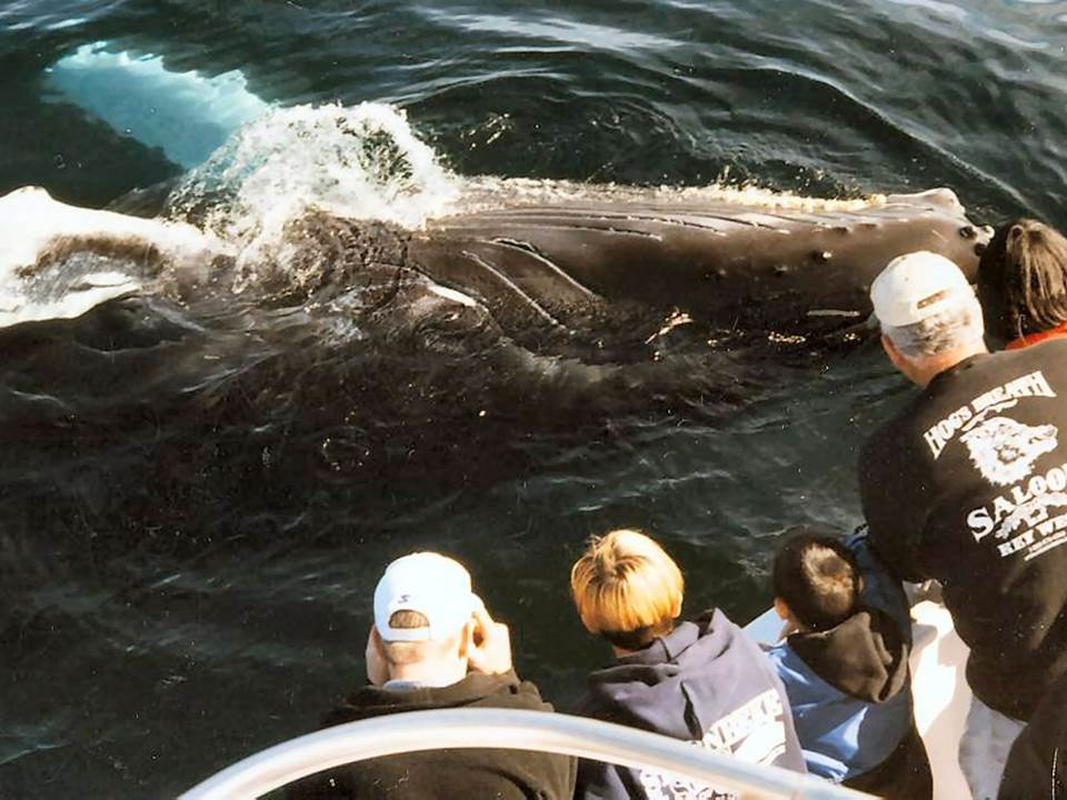WCA endorses Blue Flag eco label for whale watching boats