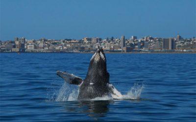 Algoa Bay awarded Whale Heritage Site status!