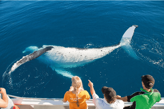"""""""Pride of Queensland: The Journey to Whale Heritage Site Status"""""""