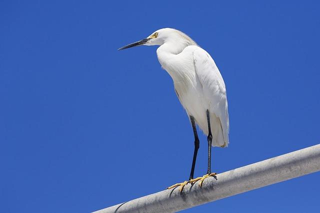 Algoa Bay Humpback