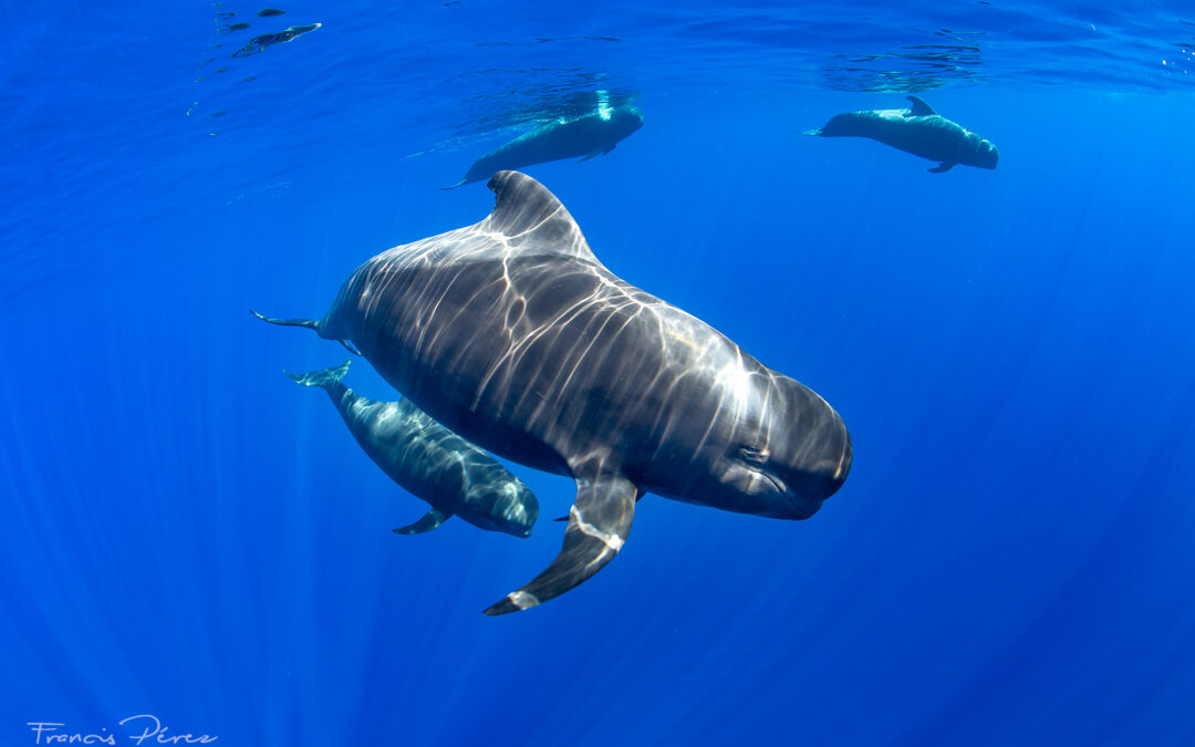 New Whale Heritage Sites in Europe and US awarded in a significant leap for wildlife protection