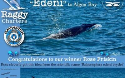 Algoa Bay WHS welcomes new whale calves